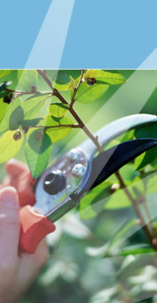 Garden maintenance in widnes cheshire and lancashire b for Garden cleaning services